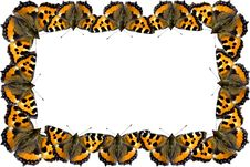 Free Butterfly Frame Royalty Free Stock Photos - 13736378