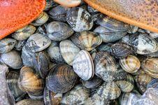 Free Sea Shell Royalty Free Stock Photos - 13736528
