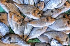 Free Fish Stall Stock Photos - 13736563