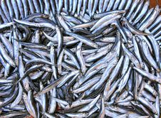 Free Fish Stall Stock Photo - 13736750