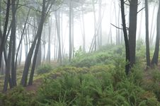 Free Misty Forest Stock Images - 13737614