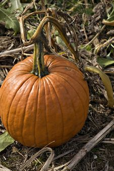Free Pumpkin Close-up Stock Photo - 13738310
