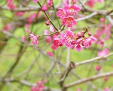 Free Spring Blossom Royalty Free Stock Photos - 13738558