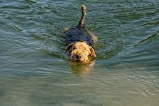 Free Swimming Dog Stock Image - 13738851