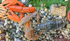 Free Seashell & Lobsters Royalty Free Stock Photography - 13739287