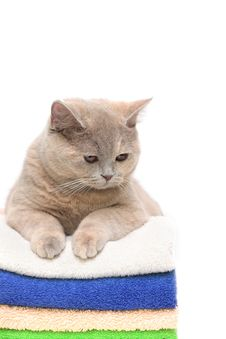 Free Cat On A Stack  Towels Royalty Free Stock Photography - 13739517