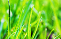 Free Macro Shot Of Green Grass Leaves Royalty Free Stock Photography - 13740037