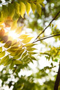 Free Warm Sunshine In Forest Royalty Free Stock Photo - 13741435