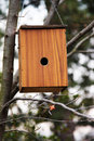 Free Wooden Bird House On A Branch Of A Tree Royalty Free Stock Image - 13744406