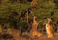 Free Wildlife - Red Deer Stock Photos - 13748443