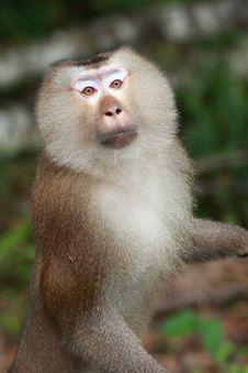 Free Monkey Stock Photos - 13740383