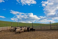 Free Sheep In The Corral Stock Images - 13742214