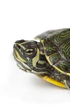 Nice Turtle Royalty Free Stock Photos