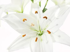 Free Bouquet Of White Lilies Royalty Free Stock Photography - 13743127