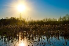 Free Sun Over Forest Lake Royalty Free Stock Photography - 13743607