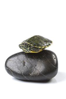 Free Nice Turtle Stock Photos - 13744153