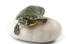 Free Nice Turtle Royalty Free Stock Images - 13744419