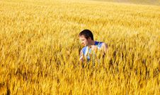 Free The Guy In A Wheaten Field Royalty Free Stock Images - 13744609