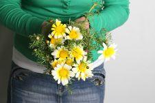 Free Daisy Royalty Free Stock Photo - 13745515