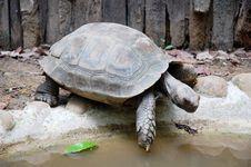 Free Tortoise Stock Images - 13746224