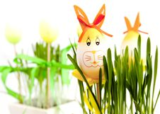 Free Easter Bunny Eggs Stock Images - 13747654