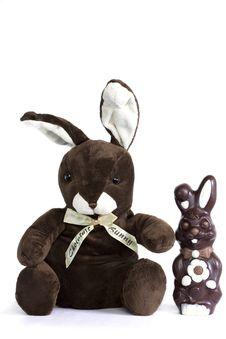 Free Two Rabbits Stock Photos - 13747773