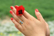 Free Valentine S Day Stock Image - 13749901