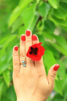 Free Valentine S Day Royalty Free Stock Photos - 13749928