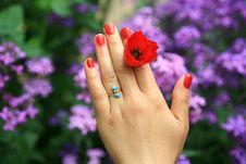 Free Valentine S Day Royalty Free Stock Photo - 13749945
