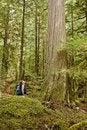 Free Man Next To Tree Stock Photo - 13755420