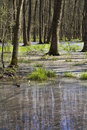 Free Flood Forest Stock Photography - 13759212
