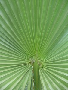 Free Palm Leaf Stock Photo - 13750200
