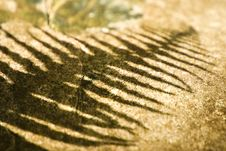 Free Fern Shadow On A Rock Royalty Free Stock Photo - 13751315