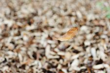 Withered Leave Falling Stock Images