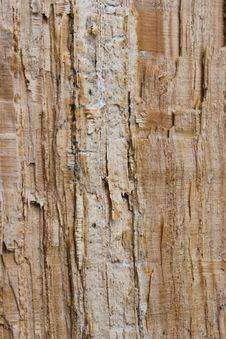 Free Structure Of A Mouldering Stock Images - 13753074