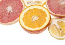 Group Of Citrus Stock Photos