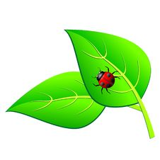 Ladybird On A Green Leaf Royalty Free Stock Photos