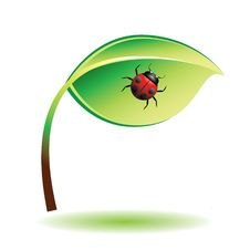Green Leaf With Ladybug. Stock Photo