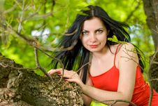 Free Young Woman On Tree Stock Images - 13754914