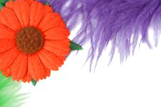 Free Feathers And Flower Stock Image - 13755741