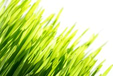 Free Green Grass Royalty Free Stock Images - 13756669