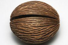 Free Tin Ball Seed Stock Photos - 13757363