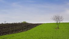 Free Green Field Royalty Free Stock Image - 13759216