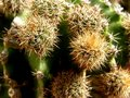 Free Spiny Cactus Blur Background Royalty Free Stock Image - 13763146