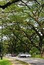 Free Taiping Lake Gardens Green Park Stock Photo - 13764960