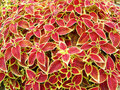 Free Unique Plant Of Lijiang Stock Photography - 13766922