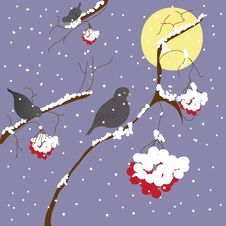 Free Winter Scene With Birds Stock Image - 13760511