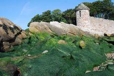Free Seaweed On Rocks Royalty Free Stock Photos - 13760538