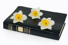 Free Holy Bible And Narcissus Royalty Free Stock Photography - 13760767