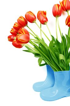 Free Fresh Tulips In Boots Stock Photography - 13762082